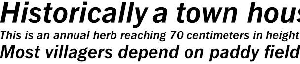 FullerSansBoldItalic